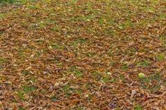 Упаденная сухая осень листьев Стоковые Изображения