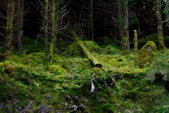 Упаденное вниз дерево Стоковое Фото