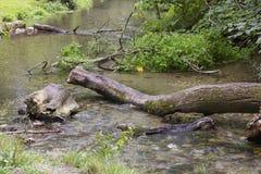 Упаденное дерево в реке Стоковые Изображения RF
