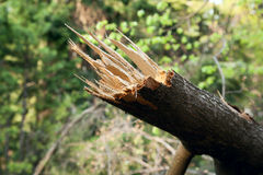 Упаденное дерево и зеленая предпосылка стоковое изображение rf