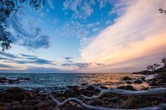 Упаденное дерево на пляже Стоковые Фотографии RF