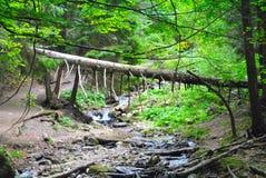 Упаденное дерево Стоковые Изображения RF