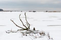 Упаденное мертвое дерево в снежном ландшафте Стоковые Фотографии RF