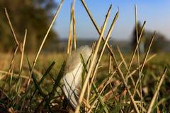 Упаденное перо Стоковые Фото