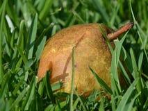 Упаденные груши Стоковое фото RF