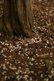 Упаденные лепестки и старый ствол дерева стоковое фото rf
