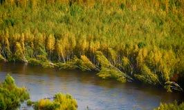 Упаденные деревья вокруг речного берега Стоковые Фотографии RF