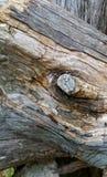 Упаденные деревья кедра Стоковое Изображение
