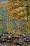 Упаденные деревья на Brown County Стоковая Фотография RF