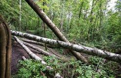 Упаденные деревья Стоковые Изображения
