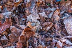 Упаденные замороженные листья на том основании стоковое фото