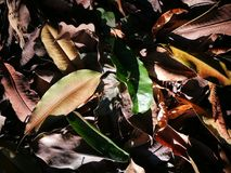 Упаденные листья будучи купанным с солнечным светом Стоковые Фото