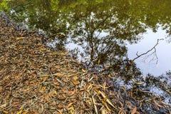 Упаденные листья близко озером Стоковое фото RF