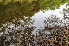Упаденные листья близко озером Стоковые Изображения