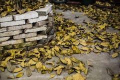 Упаденные листья в осени Стоковая Фотография RF