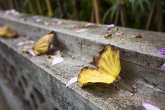 Упаденные листья в осени Стоковое фото RF