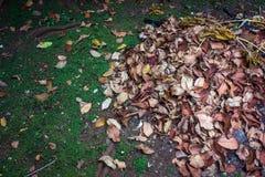 Упаденные листья в парке Стоковое Изображение