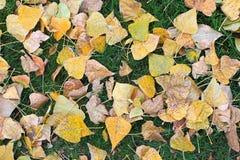 Упаденные листья дерева на зеленой траве Стоковая Фотография