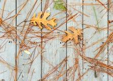 Упаденные листья и иглы сосны Стоковая Фотография RF