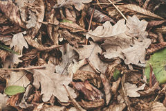 Упаденные листья каштана, клена, дуба, акации Брайн, красный цвет, апельсин и gren предпосылка листьев осени нежность поля глубин Стоковое Фото