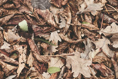 Упаденные листья каштана, клена, дуба, акации Брайн, красный цвет, апельсин и gren предпосылка листьев осени нежность поля глубин Стоковое Изображение RF
