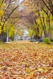 Упаденные листья на переулке Стоковая Фотография RF