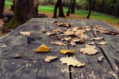 Упаденные листья на таблице Стоковое Изображение RF