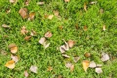 Упаденные листья на траве Стоковые Изображения