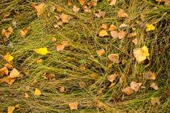Упаденные листья на траве стоковые фото