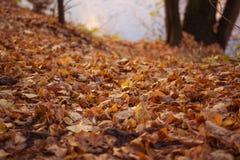 Упаденные листья осени в лесе Стоковое фото RF