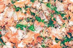 Упаденные листья осени в снеге стоковое изображение