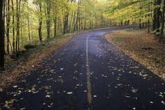 Упаденные листья осени кладут на дорогу леса в ресервировании положения Greylock, Массачусетс стоковая фотография
