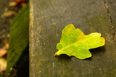 Упаденные листья осени на влажном стенде Стоковая Фотография
