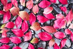 Упаденные листья осени на скалистой земле Стоковые Фотографии RF