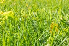 Упаденные листья осени на траве в солнечном утре освещают Стоковые Изображения RF