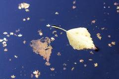 Упаденные листья плавая в темную воду, крупный план Стоковые Фотографии RF