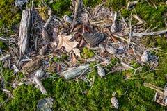 Упаденные листья, ручки и конусы сосны на поле леса f стоковые фото