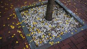 упаденные листья Стоковое Изображение RF