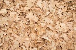 упаденные листья Стоковые Изображения RF