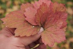 упаденные листья иллюстрация штока