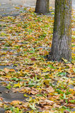 Упаденные листья 1 Стоковые Фотографии RF