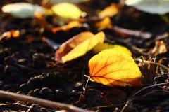 упаденные листья Стоковая Фотография RF