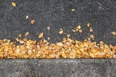 упаденные листья ginkgo Стоковая Фотография