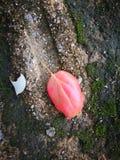 Упаденные лист лежа на том основании Стоковые Изображения