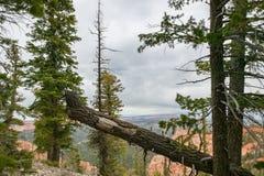 Упаденные и состоенные деревья 2 Стоковые Фотографии RF