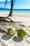 упаденные кокосы Стоковые Фотографии RF