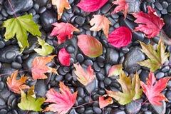 Упаденные кленовые листы на скалистой земле Стоковая Фотография