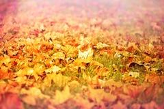 упаденные осенью листья земли Стоковая Фотография