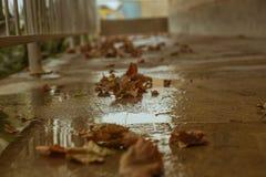 упаденные осенью листья земли Стоковое Изображение RF