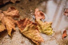упаденные осенью листья земли Стоковое Фото